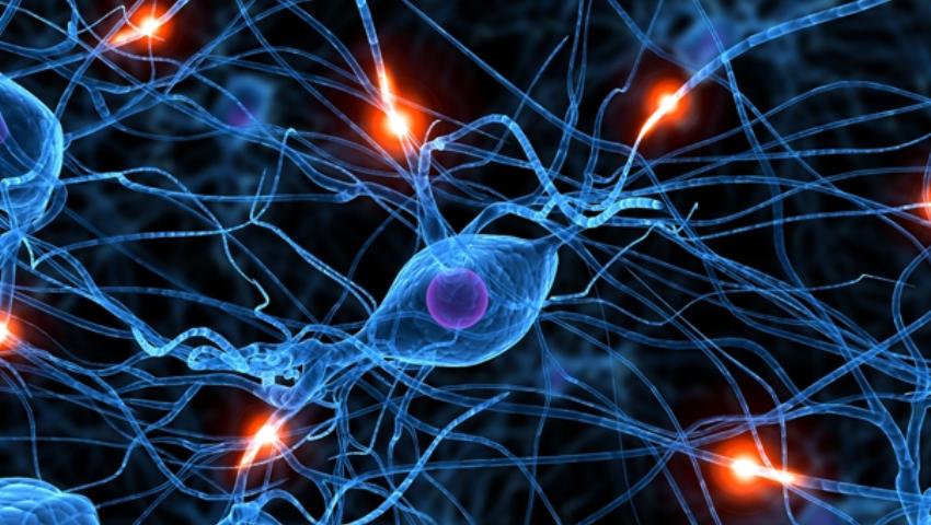 Cum funcționează creierul uman?