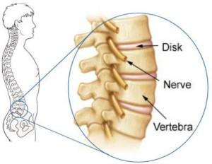 coloana-vertebrala