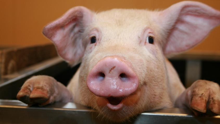 Povesti  reciclate: Porci, printese si supereroi