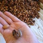 seminte de argan