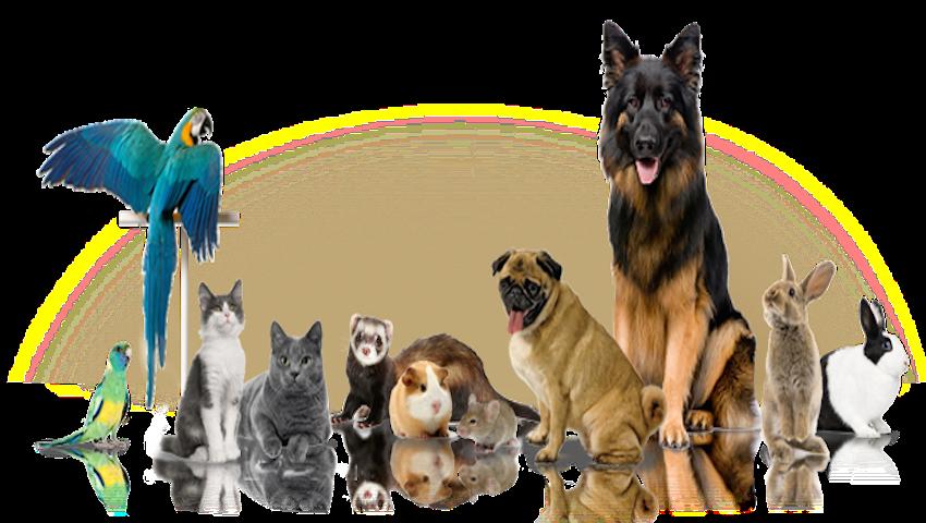 Animal de companie – animalul din dormitor versus bestia din living